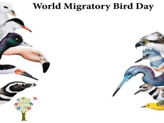 10 اکتبر، روز جهانی پرنده مهاجر