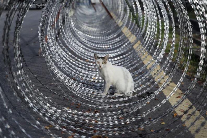 گربهای در مرکز موانع کار گذاشته شده برای قرنطینه محلی در شهر پتالینگ جایا مالزی