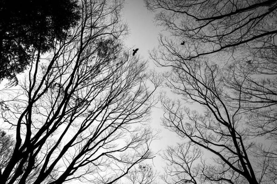 تصاویر سیاهوسفید از ژاپن در روزهای کرونایی