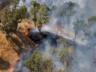 آتشسوزی جنگلی طی ماههای آتی دور از انتظار نیست