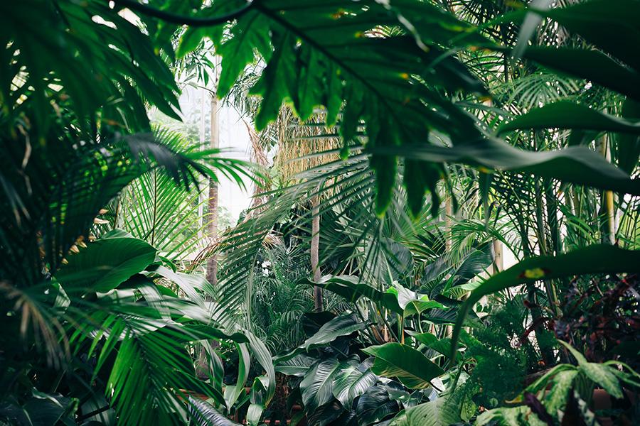 روز جهانی مناطق استوایی - International Day of the Tropics
