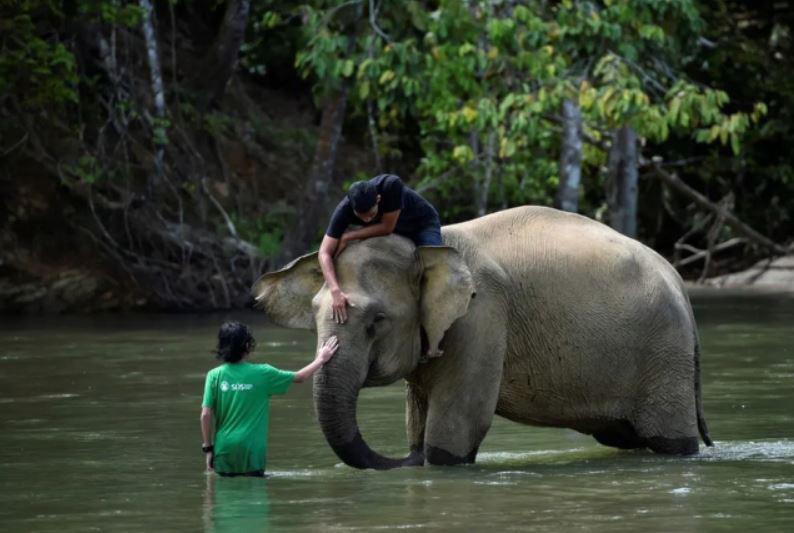 شستشوی فیل در رودخانه