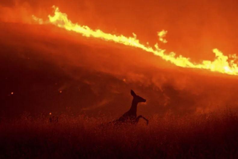 آتشسوزی جنگلی در ایالت کالیفرنیا آمریکا