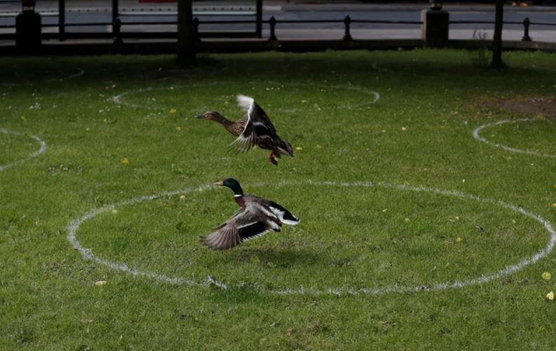 علامتهای فاصلهگذاری در پارکی در شهر نیوکاسل بریتانیا