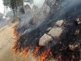 آتش سوزی در جنگلهای خائیز