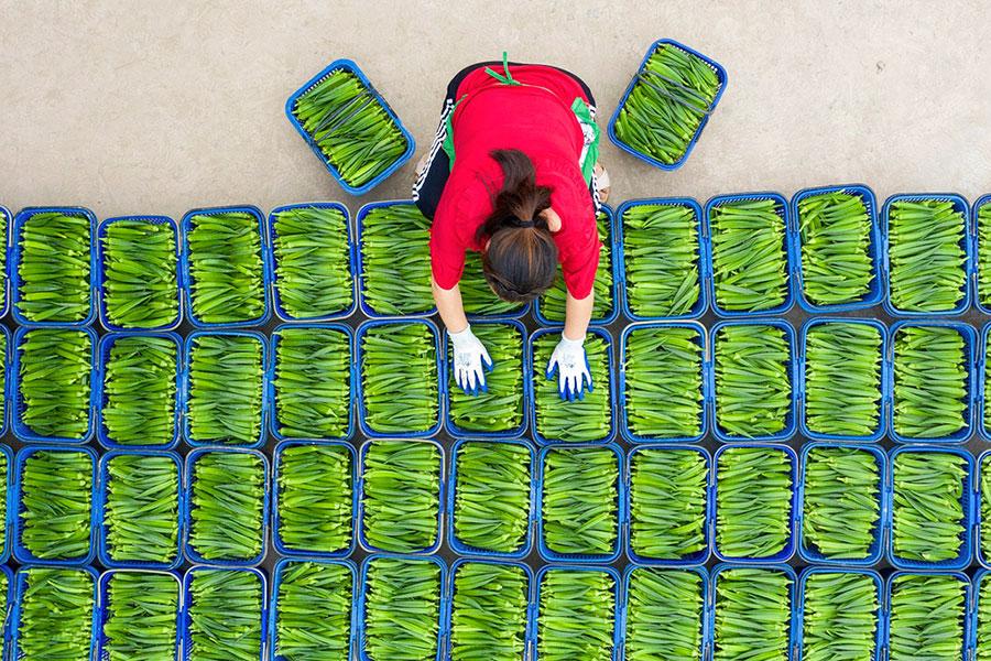 بامیه های فروشی در شهر هایان، چین