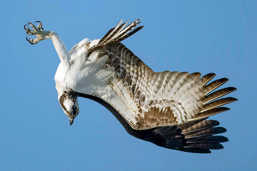 برندگان مسابقه عکاسی Audubon 2020 - Mark Hainen