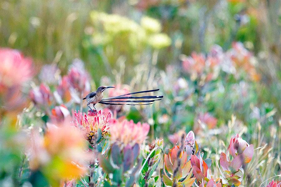 برندگان مسابقه عکاسی Audubon 2020 - Cameryn Brock