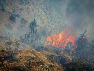 آتشسوزی در جنگلهای ارسباران به طور کامل اطفا شد