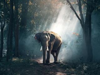 12 آگوست ، روز جهانی فیل