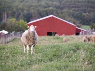 2 اکتبر ، روز جهانی حیوانات مزرعه