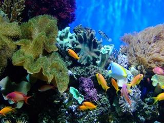 ردپای کرونا در آبزیان دریایی هم پیدا شده است