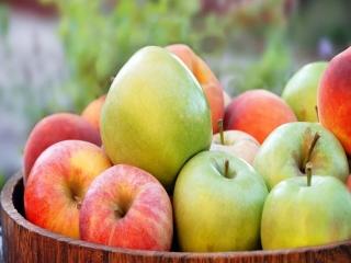 21 اکتبر ، روز جهانی سیب