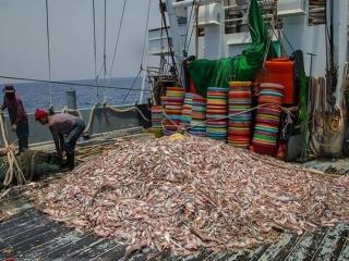 توقف صید ترال سرانجام قطعی شد